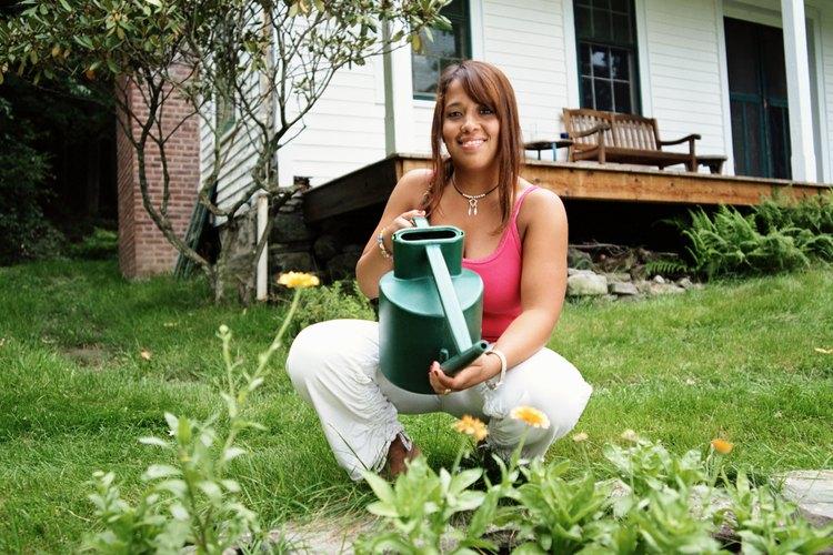 La recolección y el almacenamiento de agua para su uso en el jardín puede bajar el gasto en la factura del agua.