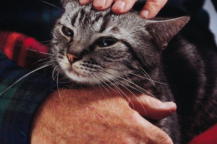 Es más complicado que un gato mayor quiera utilizar el arenero, pero no es imposible.