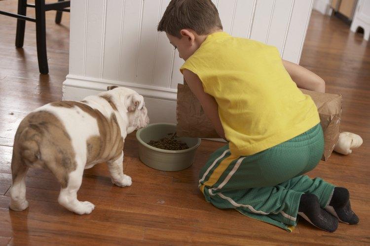 Niño alimentando a un perro.