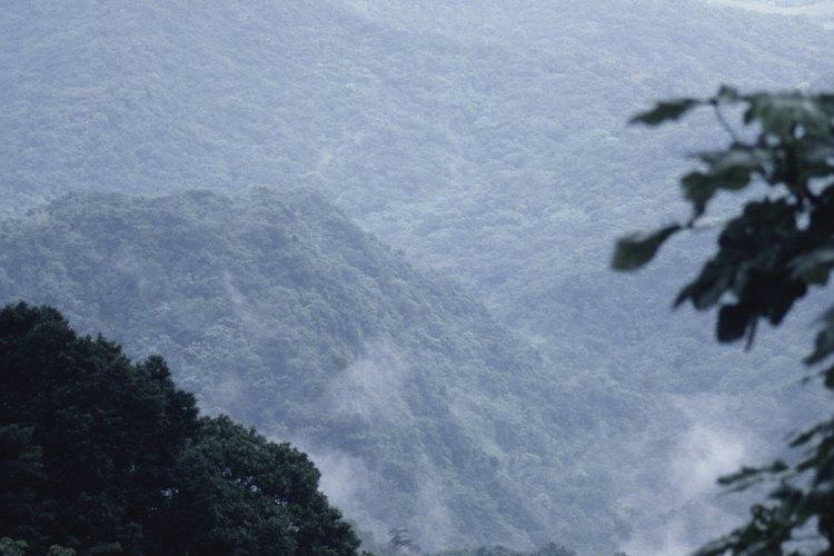 El bosque nacional El Yunque de Puerto Rico, cuenta con millas de senderos para caminantes de todos los niveles.