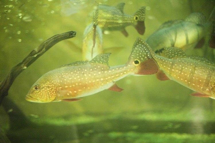 Visita el Birch Aquarium en San Diego.
