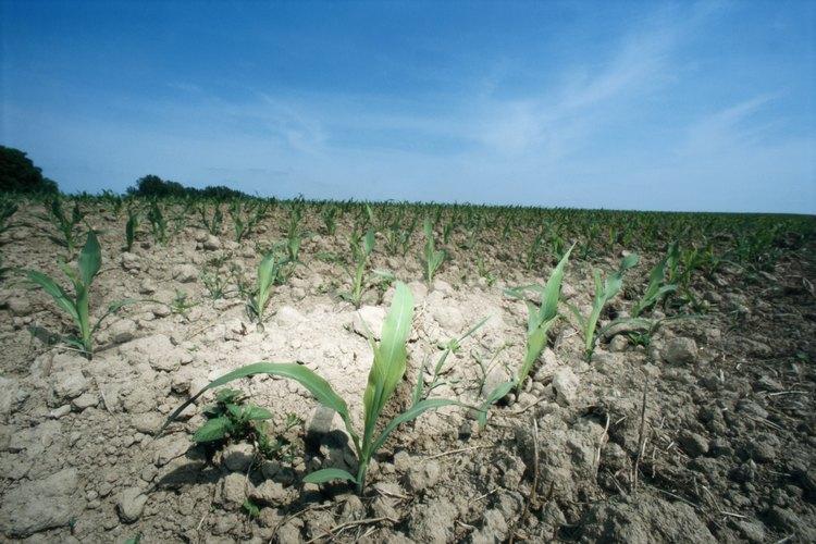 La erosión resulta en la pérdida de suelo fértil y nutrientes muy necesarios.