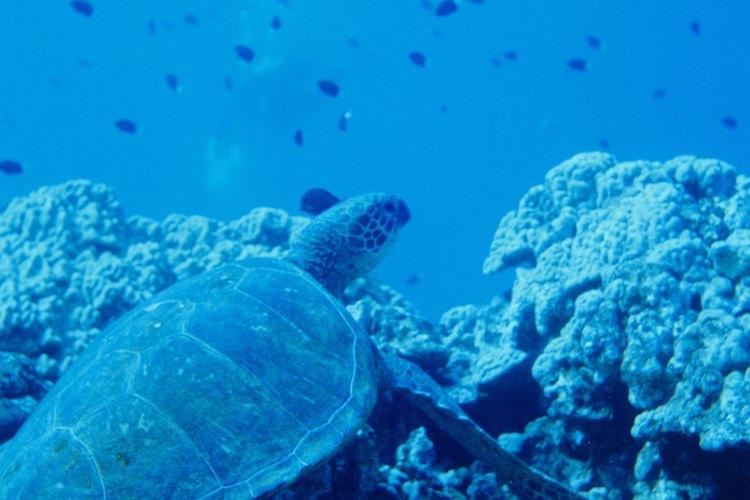 Los arrecifes son frágiles y deben tomarse las medidas apropiadas para su conservación.