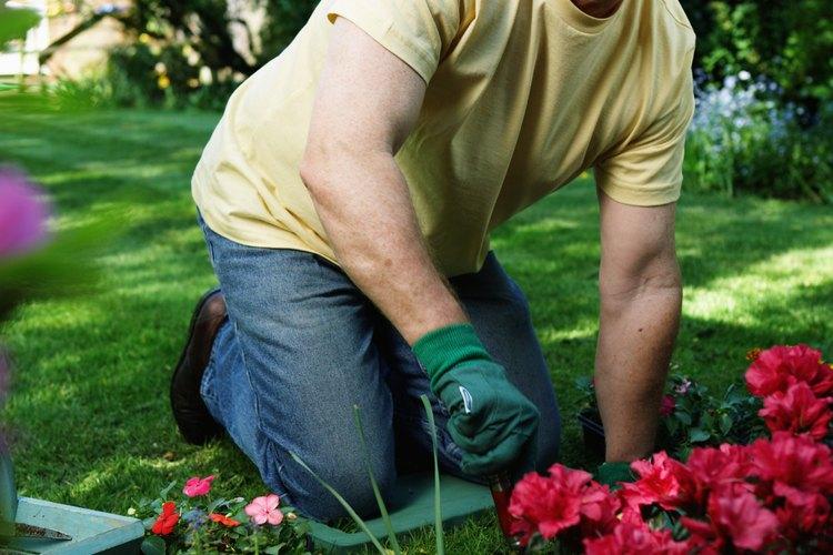 Los jardineros pueden tener las plantas venenosas en su propiedad sin darse cuenta.