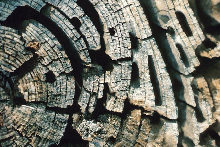 La madera infestada con insectos que habitan la madera tendrá un aspecto adelgazado y tipo túnel.