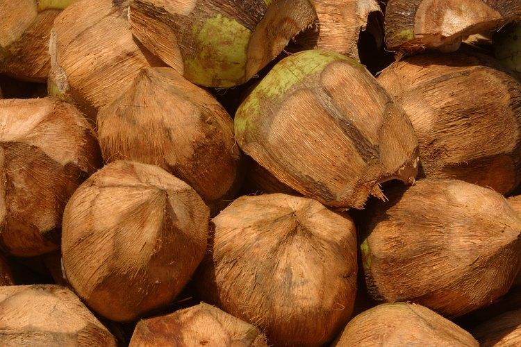Los cocos son un suplemento saludable para cualquier dieta.