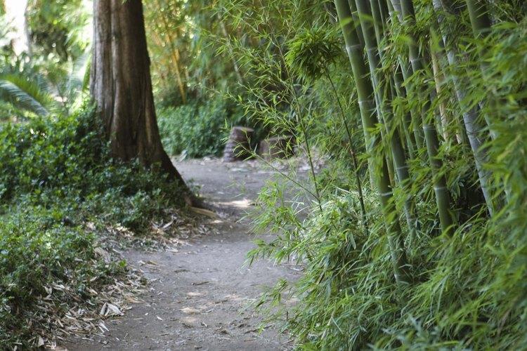 Cómo podar arbustos, árboles de hoja perenne y matorrales.