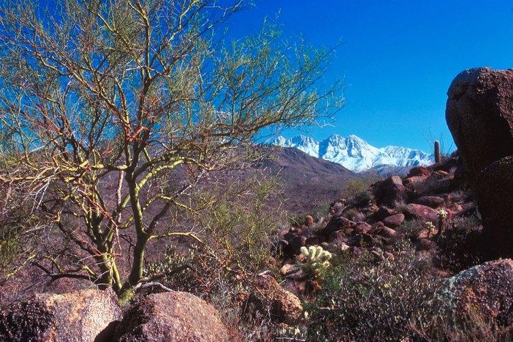 Los cuatro picos de Four Peaks están cubiertos de nieve durante enero y febrero.