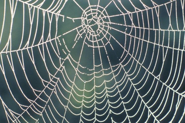 Las arañas son de una gran variedad de colores.