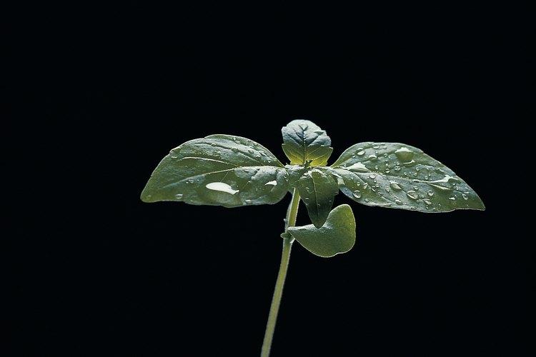La germinación de semillas es una actividad divertida y educativa para los niños.