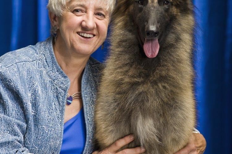 Aunque la aparición de canas es un proceso de envejecimiento normal en perros, su aparición prematura puede ser indicador de algún problema de salud.