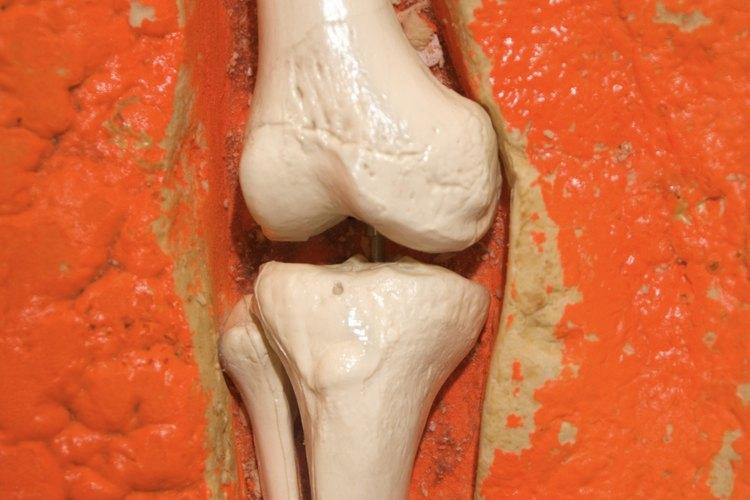 Profesiones que implican conocimiento sobre la anatomía y la ...