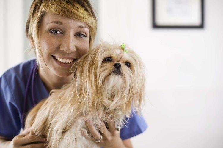 La mayoría de los veterinarios coinciden en que es seguro de usar en la piel y el pelo.