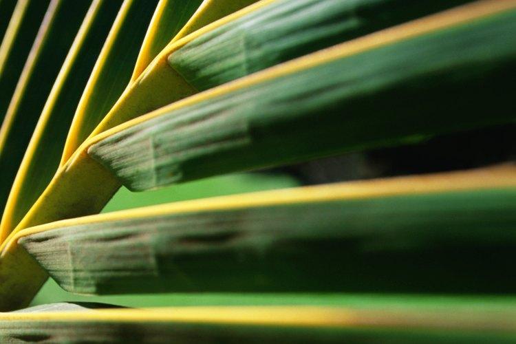 Puedes utilizar hojas de palma de verdad o de plástico para los juegos de Domingo de Ramos.