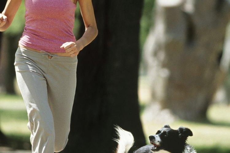 Si hay una infección pulmonar, el cuerpo de tu perro utilizará más energía para luchar contra ella.