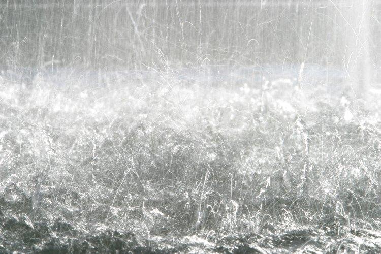 Lluvias fuertes generalmente producen la aparición de hormigas aladas.