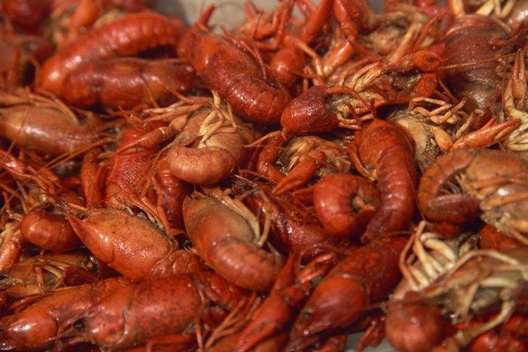 Los cangrejos se parecen a langostas en miniatura.