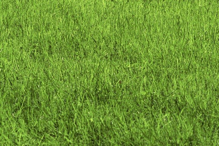 Elimina los insectos y plagas de tu jardín.