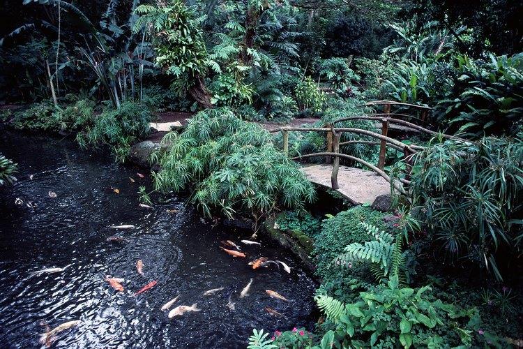 Elige las plantas acuáticas adecuadas para tu estanque de peces.
