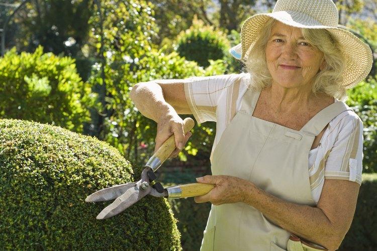Es probable que las tijeras para setos necesiten afilarse si se utilizan para cortar ramas gruesas.