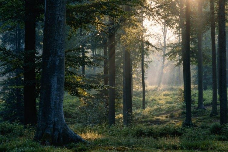 El bosque es un paraíso para los amantes del aire libre, atravesado por senderos y arroyos trucheros.