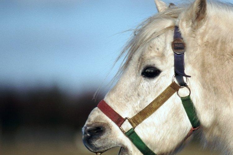 Lleva a los más pequeños a pasear en pony.