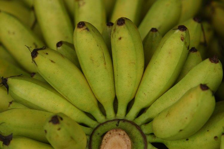 Puedes transformar un plátano de verde a maduro en un día.