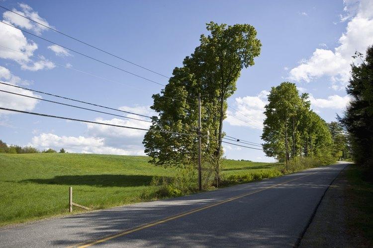 Las compañías eléctricas locales son responsables de mantener la mayoría de los árboles fuera del alcance de los cables eléctricos.