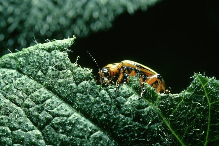 Un escarabajo de colores brillantes en una hoja verde.