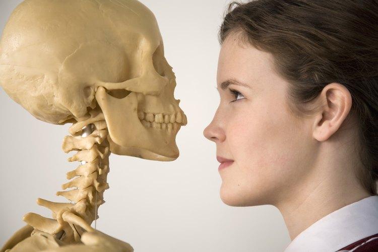Lleva una réplica de un esqueleto humano a tu clase de tercer grado.