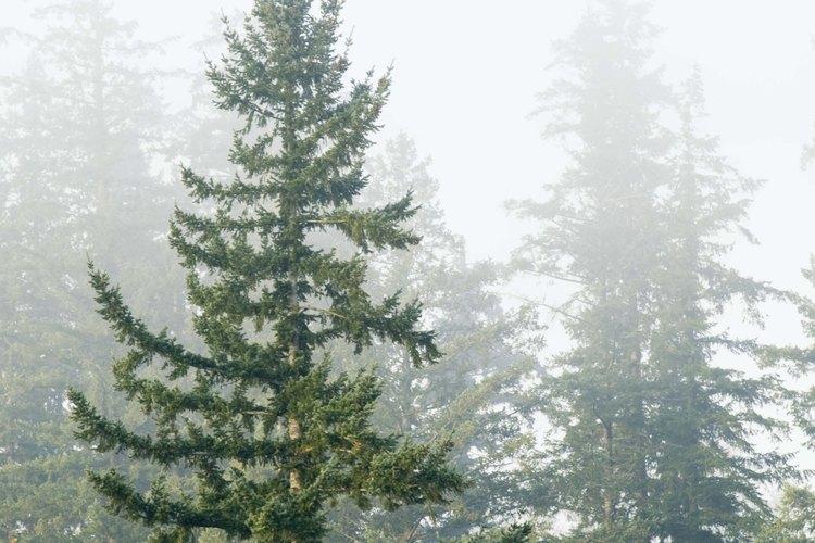 Los ecologistas estudian la tierra y ofrecen soluciones para la conservación de los recursos naturales.