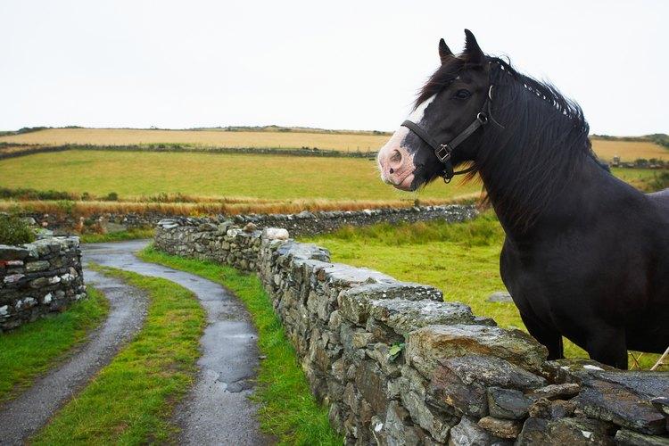 Ten cuidado con la alimentación de tu caballo.