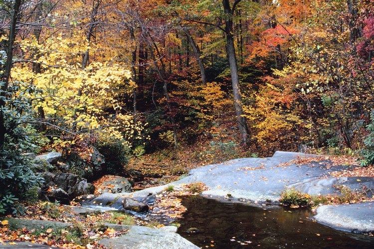 Explora los densos bosques de roble, haya, arce y cicuta al este de Pennsylvania.