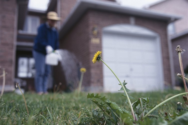 Aplica un plaguicida conteniendo cipermetrina a las zonas infectadas de tu suelo.