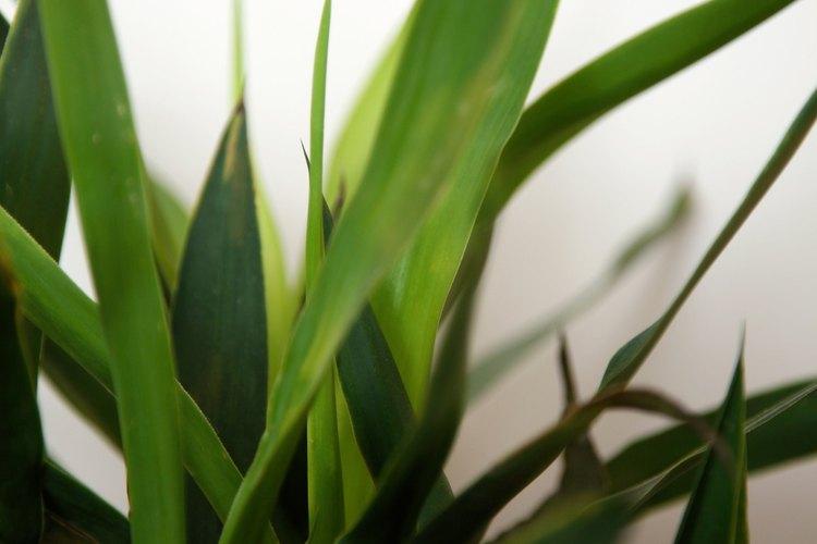 Coloca plantas de interior en tu dormitorio para ayudar a circular y limpiar el aire.