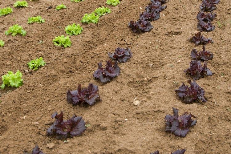 La cal hidratada equilibra el pH del suelo para el crecimiento apropiado de las plantas y la absorción de los nutrientes.