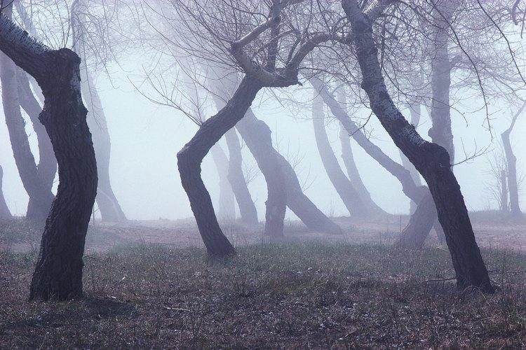 Es posible que quieras mantener el bosque oscuro y tenebroso pero aún así los visitantes necesitarán un poco de luz para caminar a través del bosque.