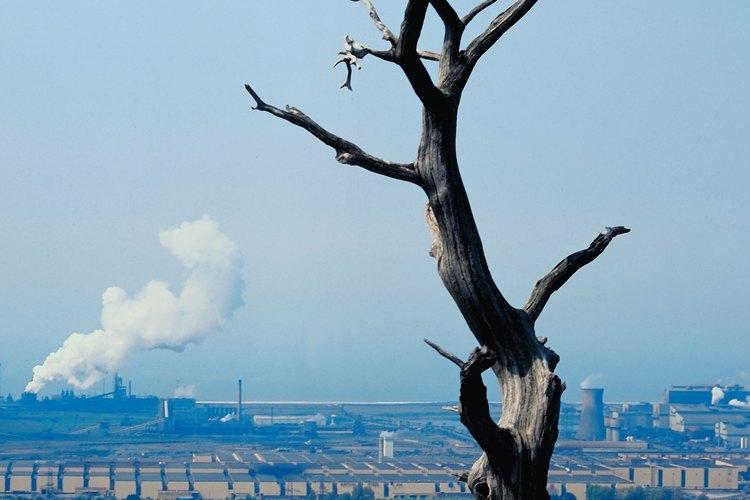 La lluvia ácida contamina o destruye la vida en el planeta.