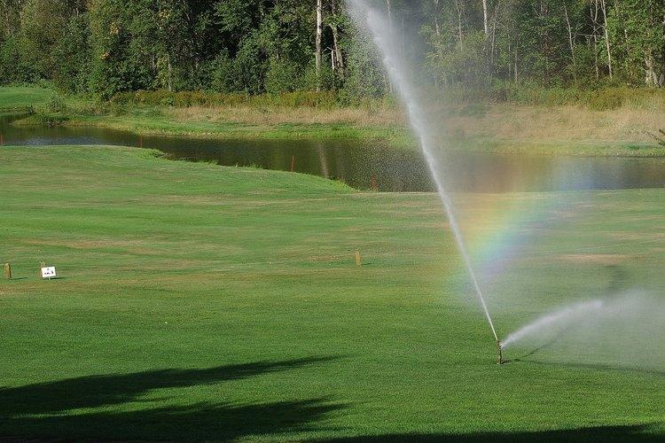 Mantener las semillas de césped humedecidas ayuda a estimular la germinación.