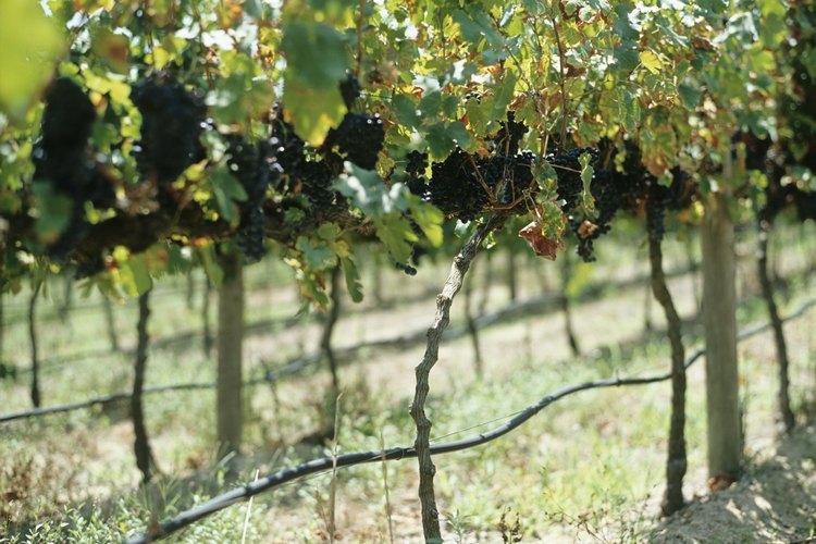 Visita viñedos y practica agroturismo en tus vacaciones.