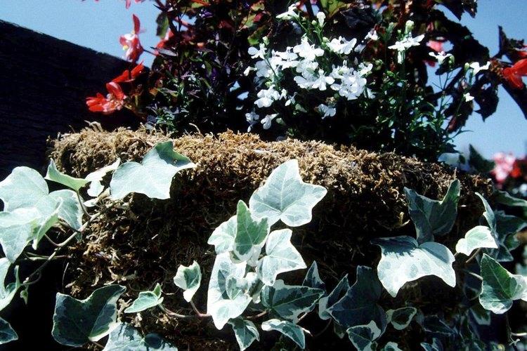 El musgo de turba es utilizado para hacer recipientes de plantas orgánicas.