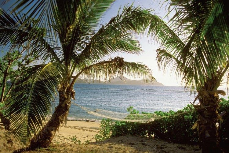 La palmera chusan miniatura es resistente al frío a menos de 3 grados fahrenheit (-16,11 ºC).