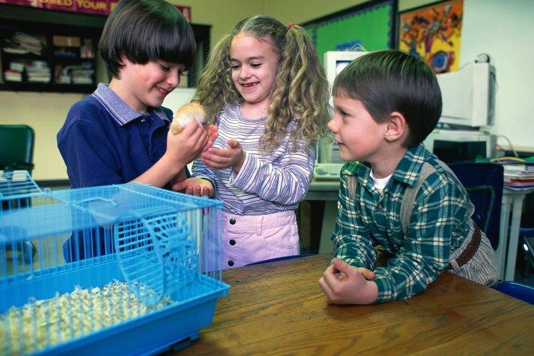 ¿Qué tipo de lecho es mejor para tu hamster?