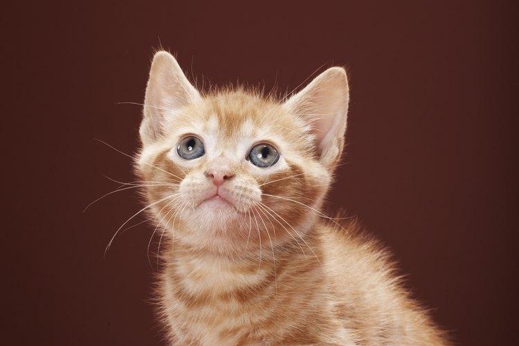 Los gatos son animales independientes pero leales y adorables.