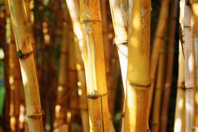 Usa tu imaginación para hacer tus manualidades de bambú.