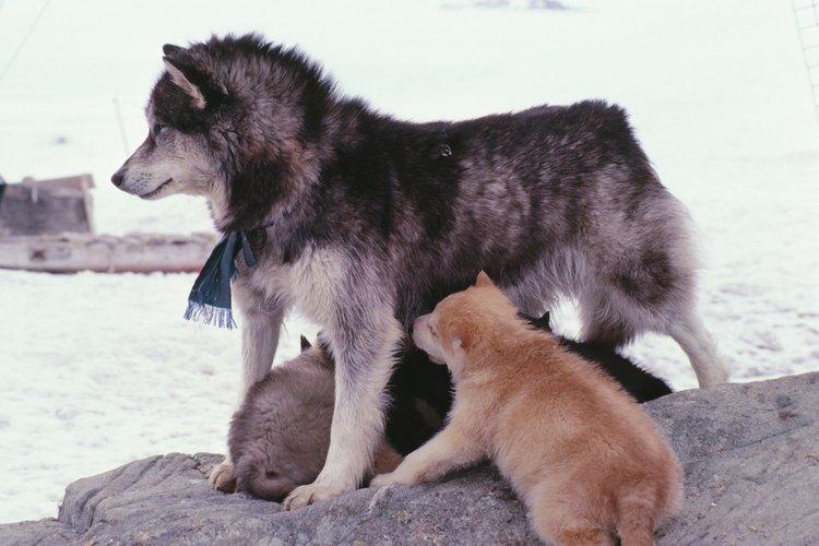 Es crucial el trato que le des a tu perra si sus cachorritos fallecen.