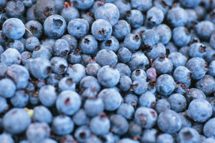 Las moras azules contienen muchos nutrientes importantes.