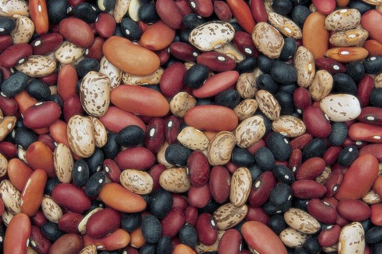 """El cultivar """"Florida Speckled"""" produce porotos blancos con manchas púrpuras."""