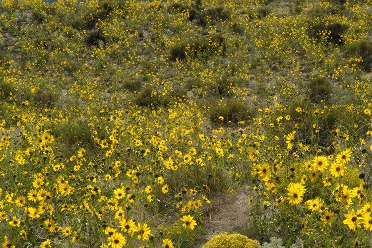 Verás flores silvestres a lo largo de la ruta casi todo el verano.