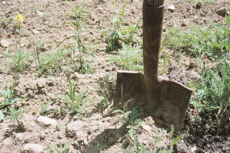 Planta las semillas una vez que haya pasado la amenaza de la última helada.